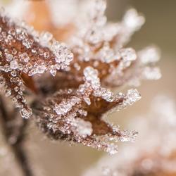 Morning Crystals