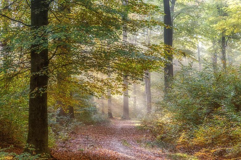 Toch nog nazomer ... - Vanochtend vroeg in het Edese Bos. Wat was het mooi met de herfstkleuren en het door de mist gefilterde zonlicht.<br /> <br />