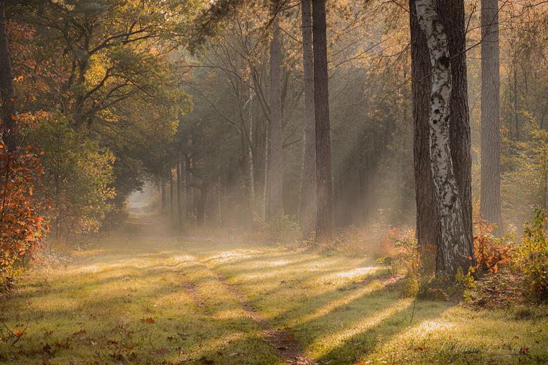 Magic light  -
