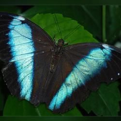 Vlindertuin 3