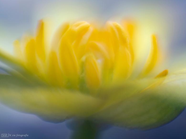 Speenkruid . . .  - Ik heb het speenkruid al zien bloeien.....<br /> Heerlijk van de week weer even naar buiten geweest....was genieten van het prach