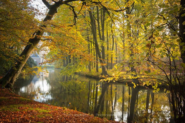 Autumn Elswout - Landgoed Elswout in herfsttooi.