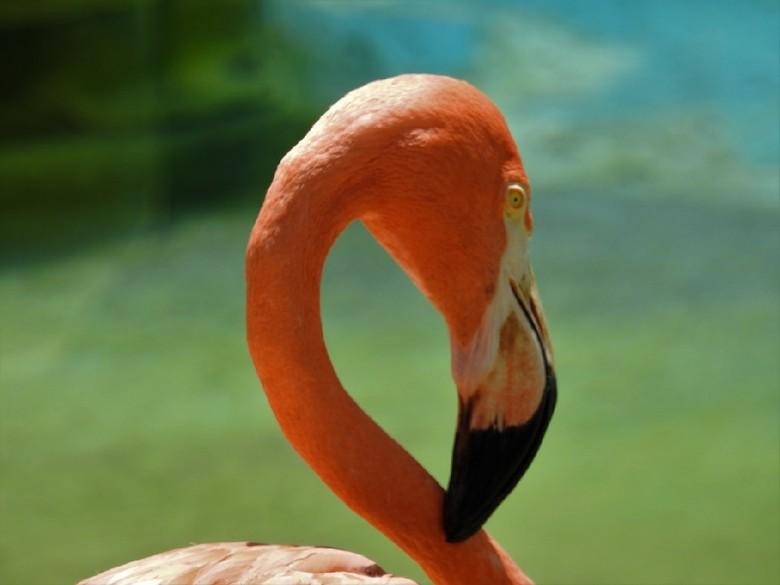 Flamingo 3 -