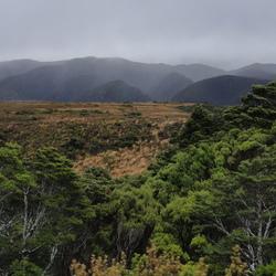 Wildernis - Heaphy Track, Nieuw Zeeland
