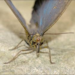 een closeup van een vlinder.............