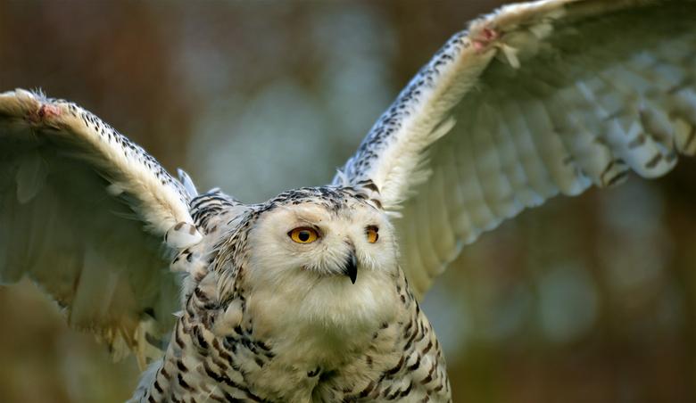 Hedwig - Wie kent haar niet?<br /> Groetjes, Djurre