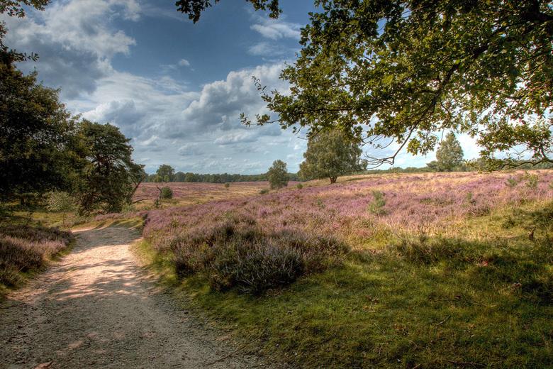Wolfhezer heide | Landschap foto van jhslotboom | Zoom.nl