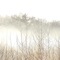 Toen kwam de zon.....met mist!