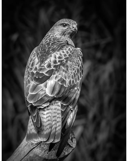 IMG_20200701_223839_636 - Een oudje uit het archief. Geschoten in Birds world Sanctuary in Kaapstad (2011)