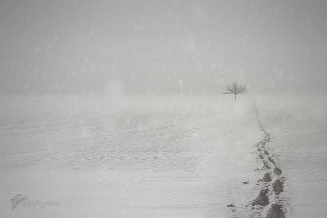 Adem geluid - Sneeuw boom stappen