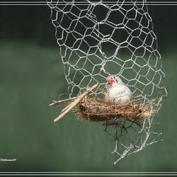 Nestje bouwen....