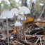 Nog paddenstoeltjes...