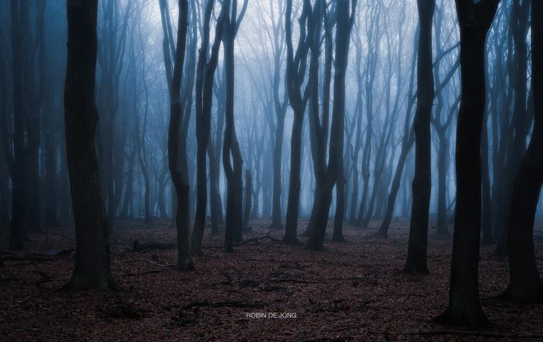 Creepin. - Het Speulderbos in dichte mist.