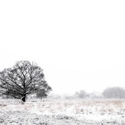 Eenzaam in de kou