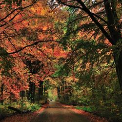 Mooi herfst