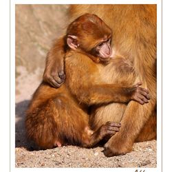 Mother's protection....!