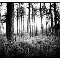Door het bos de bomen niet meer zien.