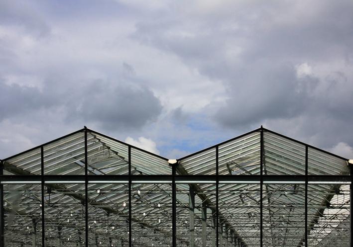 groeien zonder zon - glastuinbouw