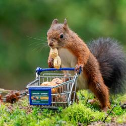 slimme eekhoorn legt wintervoorraad aan
