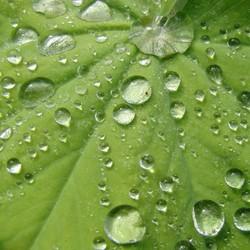 Regen regen en nog eens regen