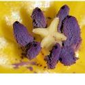 Bloemenfotografie in macro