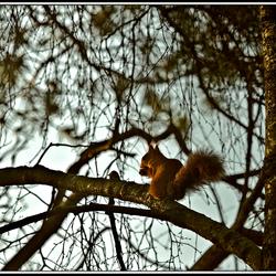 Eekhoorntje op boomtak
