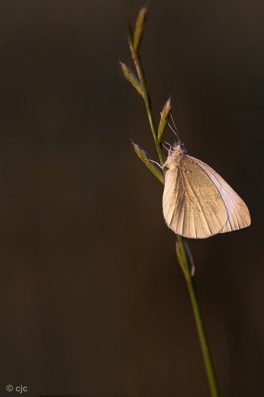 In the early light (update) - iedereen bedankt voor de commentaren op mijn vorige foto&#039;s .<br /> <br /> groetjes,<br /> <br /> Constant