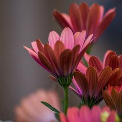 Bloemen met spin