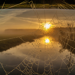 Spiderweb sunrise