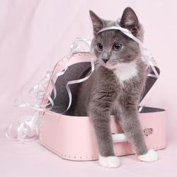 Kat in 't bakkie