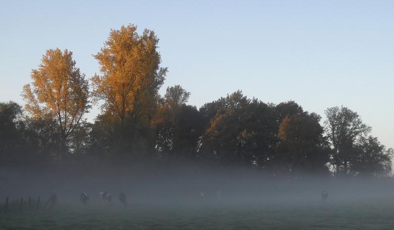 Misty morning. -