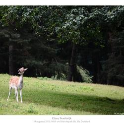 Wild- und Wanderpark Silz