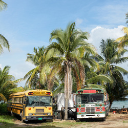 Tropical bus
