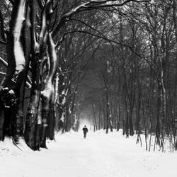 Sneeuw in Hoenderloo