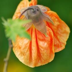 oranje bloemetje