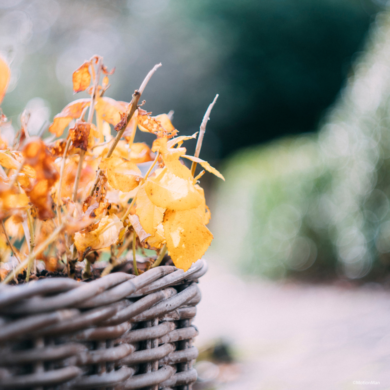 Ten einde - Deze plant heeft de herfst helaas niet gehaald.<br /> <br /> <br /> <br /> ©MotionMan 2019