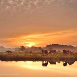 Mistige ochtend in het Twiske