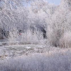 Winterwonderland II