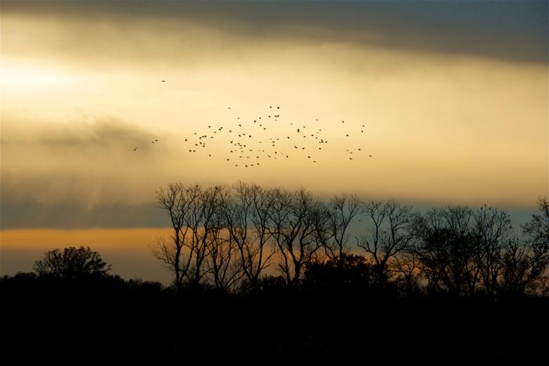 luchten - zaterdag gefietst en opeens zagen we de lucht mooi opgelicht worden, de bomen al in wintertooi, de kraaien in de lucht en lichte regen uit d