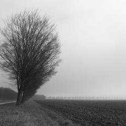 Mistige ochtend nabij Kathedralenbos