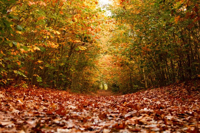 écht herfst  -