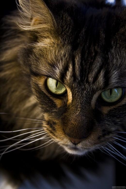 Intens - Mijn kat Tarzan kan heel intens kijken