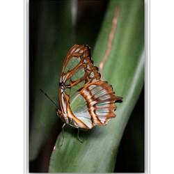 Vlinder* Blijdorp
