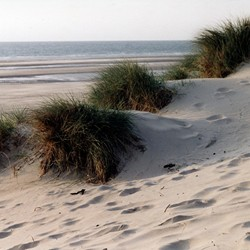 duinen bij WISSANT(fr.)