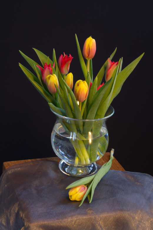 Tulpen Op Vaas.Vaas Tulpen Overig Foto Van Asanders Zoom Nl