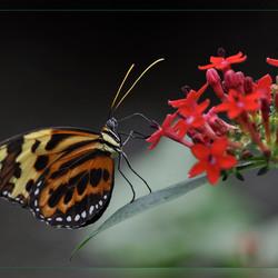 Vlindertuin Berkenhof 1