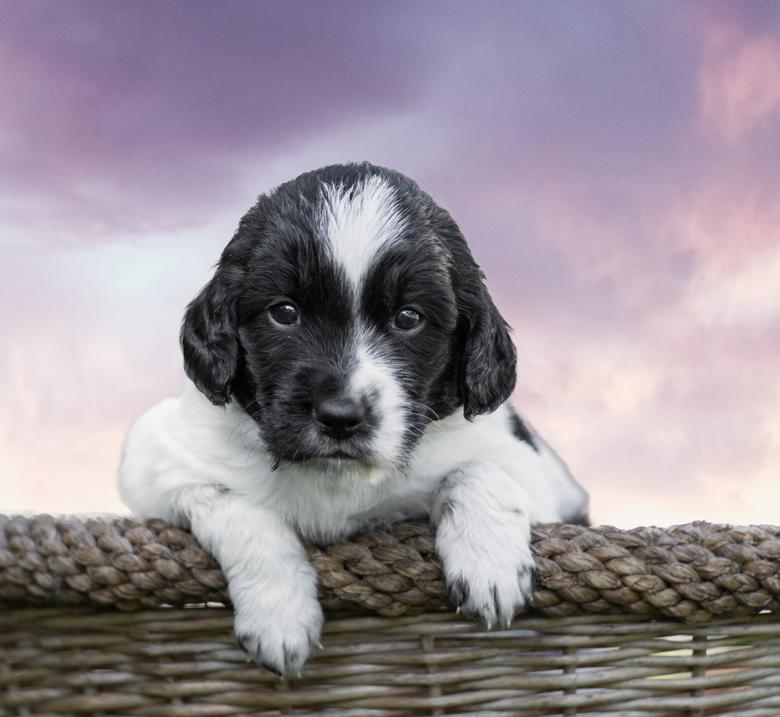 Hello there - Puppy in een mandje