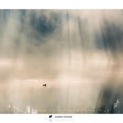 Tufted Duck heaven