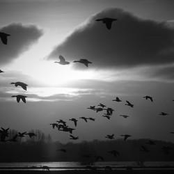 Vogelvlucht.