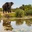 olifant in kruger
